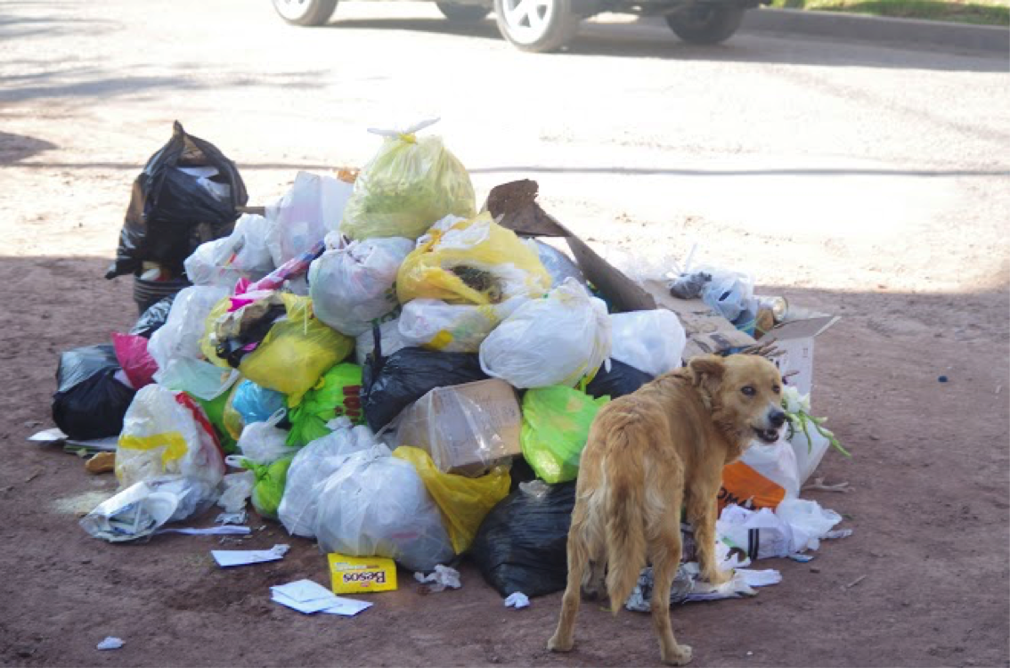 trash and dog