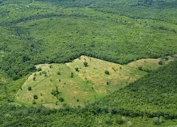 """Rezoning"" in Brazil Opens Endangered Atlantic Forest to Development"